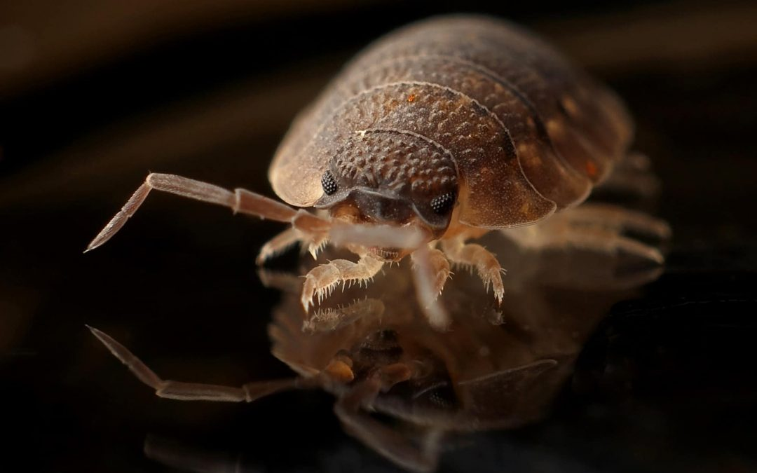 Landlord or Tenant: Who Will Pay For Bed Bug Inspections? – Keyrenter Highlands Ranch